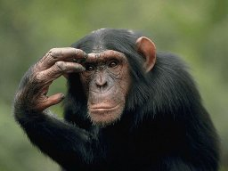 majmuncic