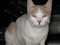 Mr_Little_Kitty