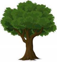 Tree_Trunks1234